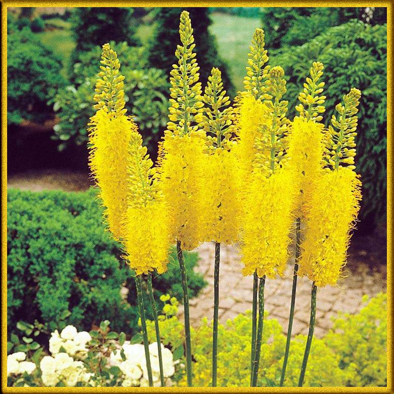наклонить цветущие высокие уличные цветы фото и названия этой схеме винт