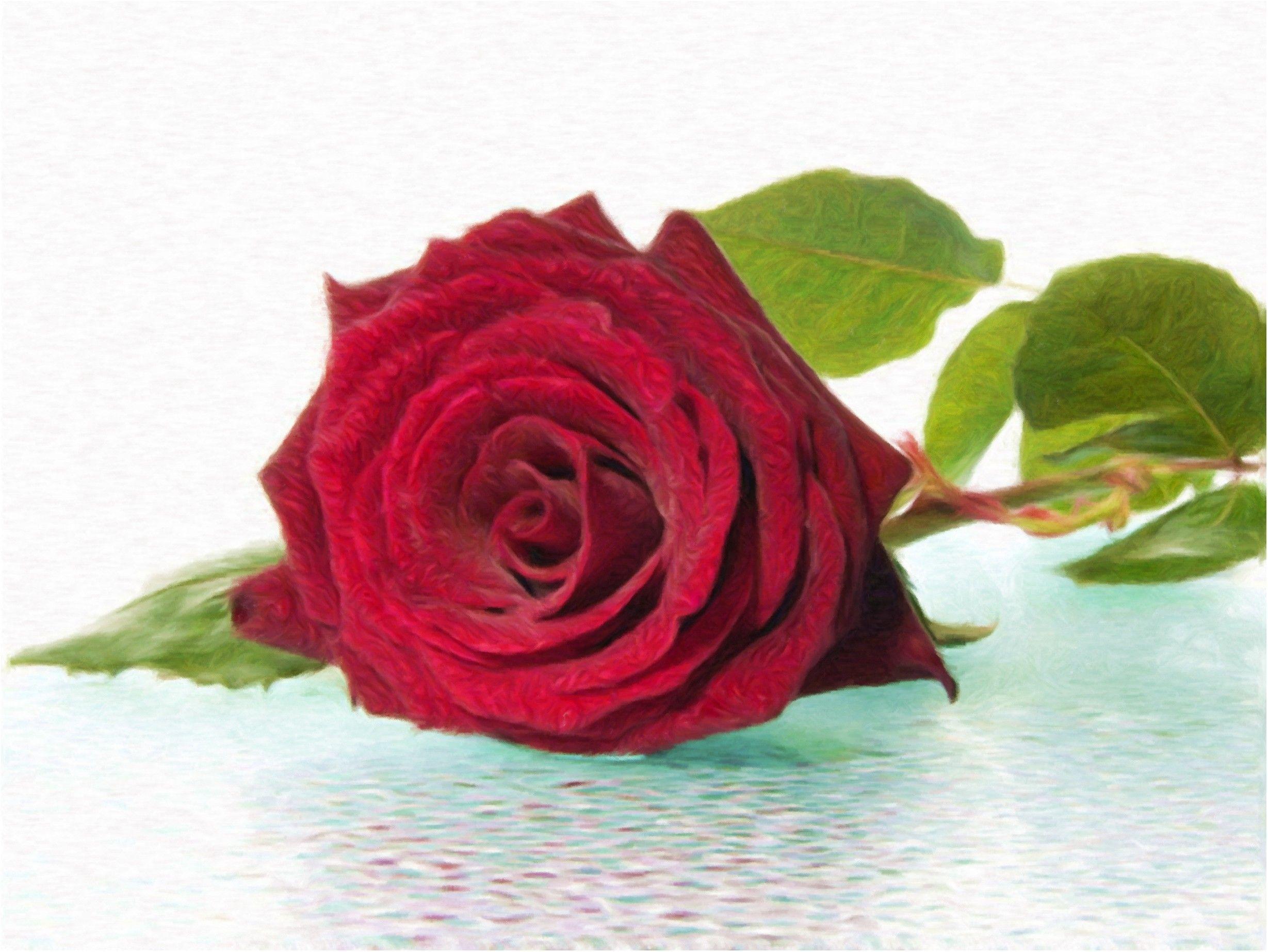 панели были самая красивая одинокая роза фото пожалуйста кто