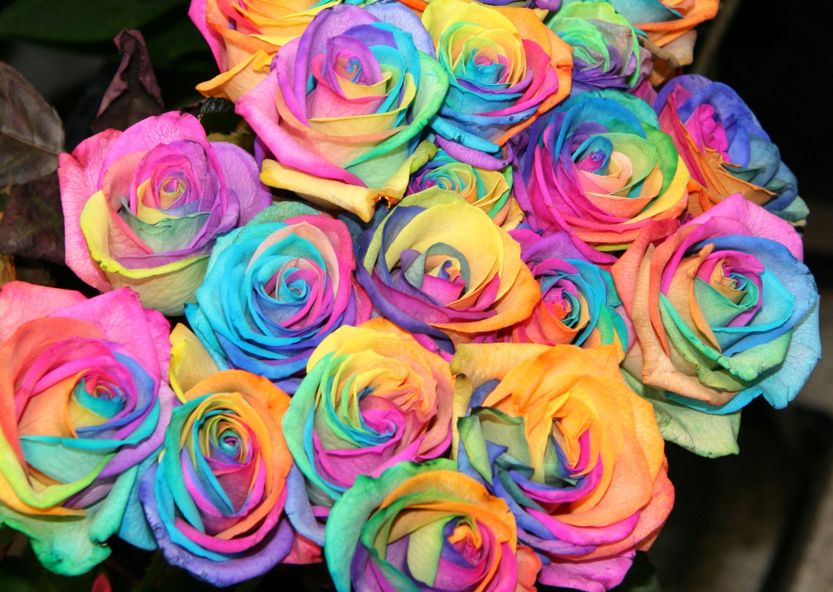 Картинки розы разноцветные с блеском
